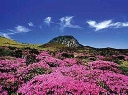 济州岛双飞四日游(精华景点、亲子体验、特色美食)