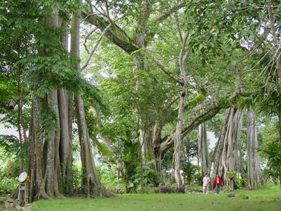 独树成林景区图片