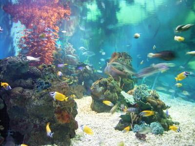 老虎滩海洋公园珊瑚馆景区图片