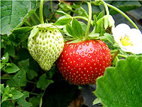 草莓采摘、农家饭、横山寺一日游